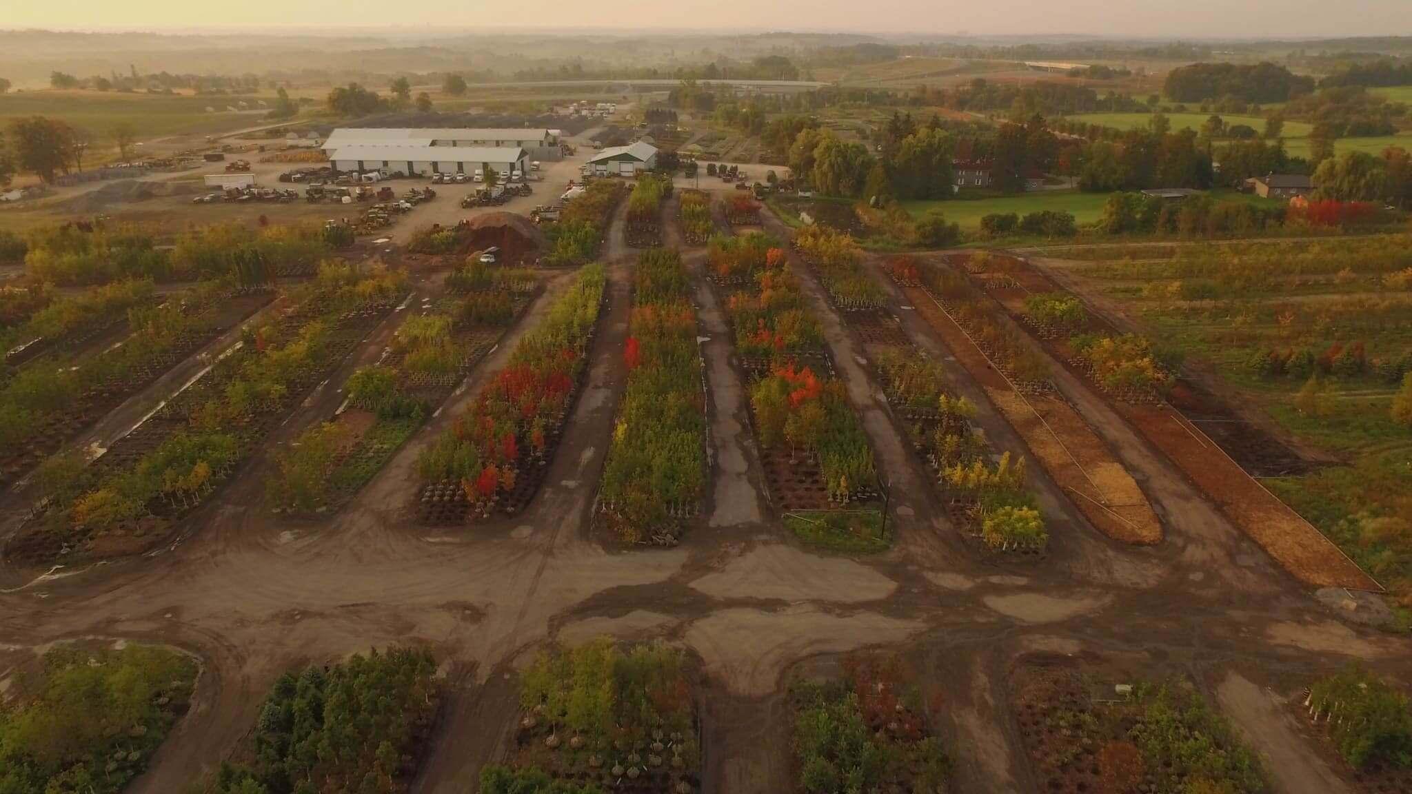 Dutchmaster Nurseries Ltd  - Wholesale Producer Of Quality Plant